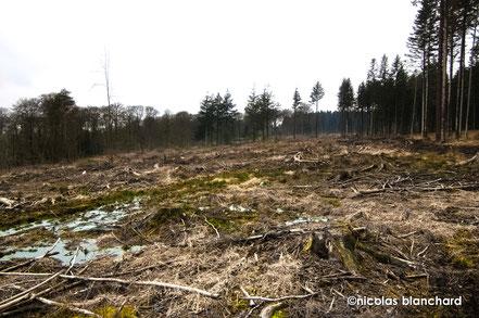 Forêt d'Ecouves, parcelle n° 377, Coupe rase en 2014, le sol n'est plus protégée des intempéries et des rayons du soleil.