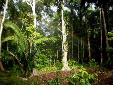 Schamanismus aus Amazonien