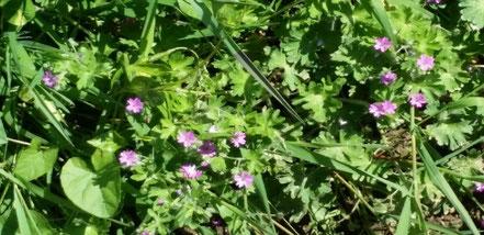 Jardin clôturé, fleurs de printemps