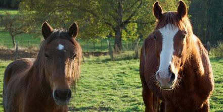 Malbo et Pompon allaient partir à l'abattoir. Pompon a été sauvé dans une foire et Malbo chez un marchand de chevaux qui n'avait pas pu le débourrer.