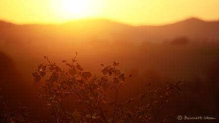 Meditation Sonne im Bauch