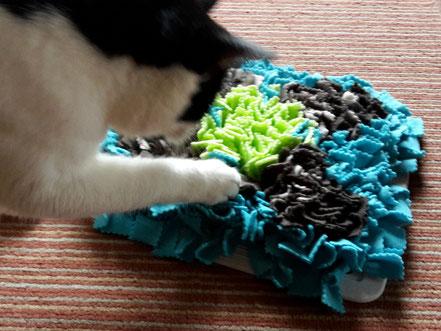 Fummelmatte Hund Katze Beschäftigungsspielzeug