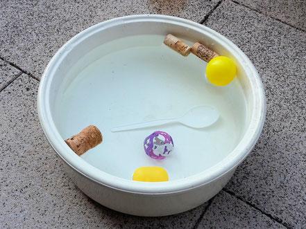 Wasser Fummelschale Abkühlung Katze
