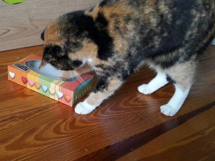 DIY Fummelbox Zupfbox Beschäftigungsspielzeug Hund Katze