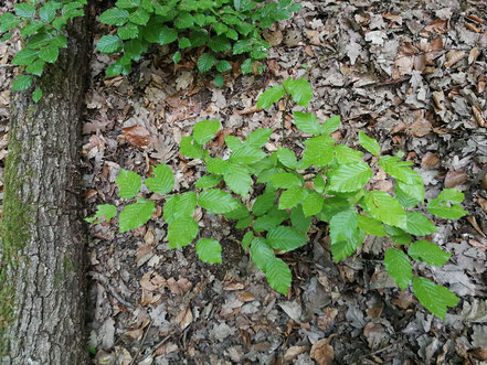 Grünes Erwachen im Wald- Entschleunigung