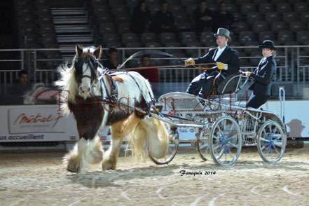cheval IRISH COB attelé en simple