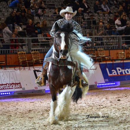 cheval de race IRISH COB monté