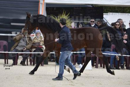 ARTIK CADILLAN (cheval Arabe)