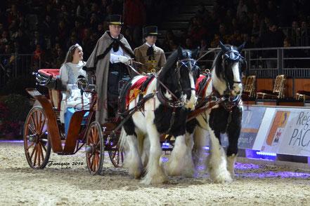 cheval IRISH COB attelés en paire