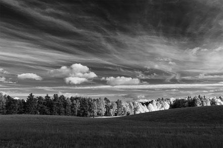 Feld, Wald, Bäume, trees, Infrarot, Türkshof, Holger Nimtz, Infrared, Fotografie, Uckermark, Photography, Infrarotaufnahme, IR,