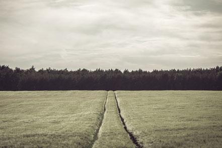 field, rural, agriculture, landscape, Minimalismus, minimalism, minimalist, minimalistisch, Holger Nimtz, Wandbild, Kunst, fine art,