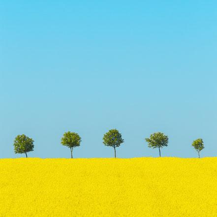 Bodden, Sonnenaufgang, sunrise, Nebel, Born, Fotografie, Minimalismus, minimalism, minimalist, minimalistisch, Holger Nimtz, Wandbild, Kunst, fine art, Fotokunst, Photography,
