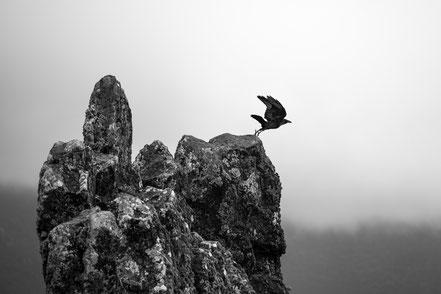 Crow, Fly, bird, monochrome, fine art, dekorativ, wallart, El Hierro, Canary Islands, Kanarische Inseln, Kanaren, Holger Nimtz, Fotokunst,
