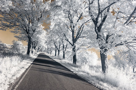 Landstraße, Infrarot, Holger Nimtz, Infrared, Fotografie, Allee, Bäume, Havelland, Photography, Infrarotaufnahme, IR,