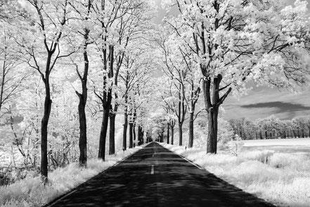avenue, Infrarot, Holger Nimtz, Infrared, Fotografie, Allee, Bäume, Havelland, Photography, Infrarotaufnahme, IR,
