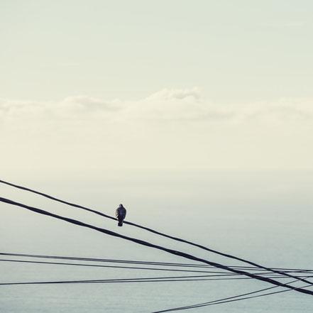 Taube, Stille, pigeon, minimalismus, minimalist, minimalism, fineart, dekorativ, wallart, El Hierro, Canary Islands, Kanarische Inseln, Kanaren, Holger Nimtz, fine art,