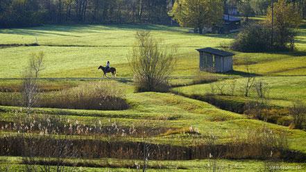 Eine Hütte und ein berittenes Pferd im Schollenriet bei Altstätten