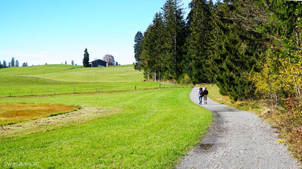 Wiese mit Weg am Waldrand