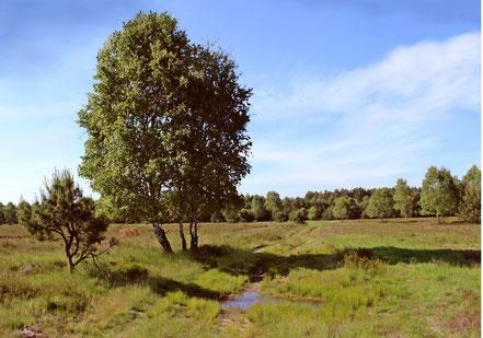 Freifläche in der Glücksburger Heide