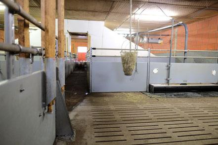 Unbehandelte Holzlatten als Beschäftigungsmaterial und Stroh in einem Raufutterkorb.