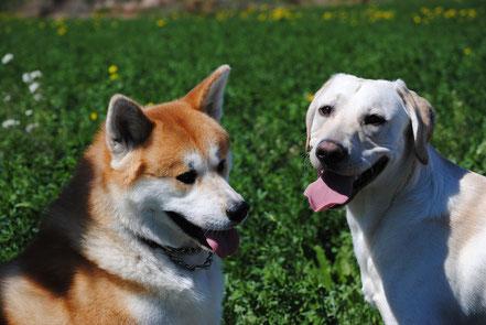 Junghundetraining für Fortgeschrittene