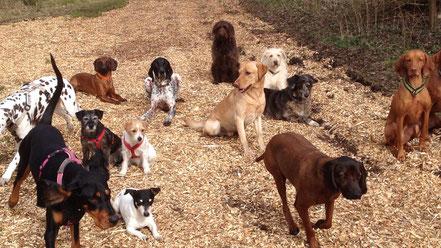 Geeignete Hunderassen zum Trailen