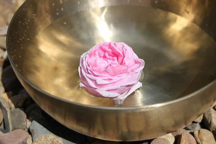 Rosenblüte im Wasser - Freude an der Bewegung Andrea Opitz