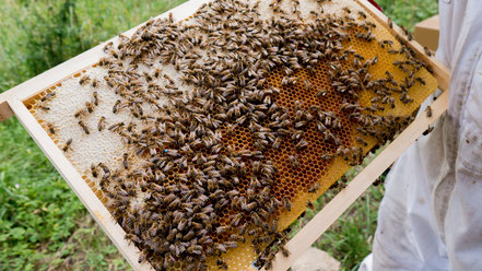 le rucher du grizzly - miel du jura - ruche - association llb