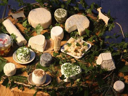 fromage de chèvre - la chèvrerie de la vallée verte - association llb - jura