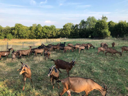 la chèvrerie de la vallée verte - association llb - jura - fromage de chèvre