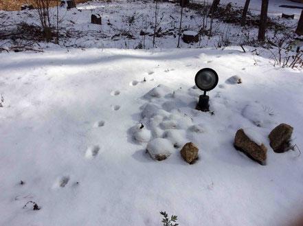 今年初めての積雪。何の足跡だろう?