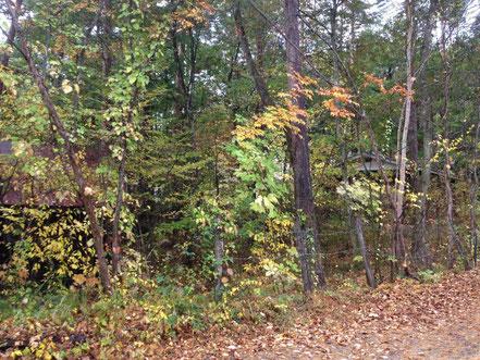 落葉が進んできました。