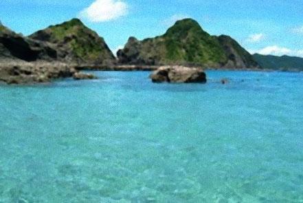 サンゴの生息する綺麗な坊津の海。