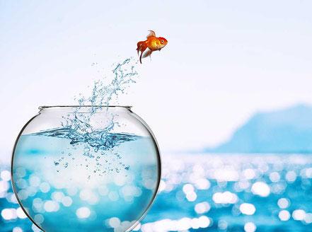 Goldfisch springt aus rundem Glasbehälter ins offene Meer
