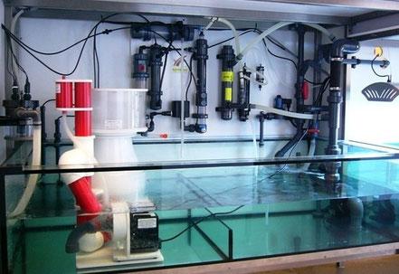 Bild: Teilfilteranlage einer ca. 5.000l fassenden Aquarienanlage