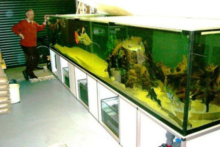Referenzen aquarium watermann - Aquarium in der wand ...