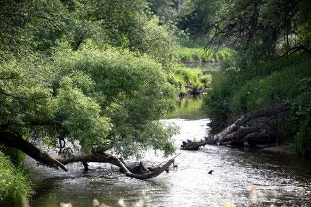 Голавлиная протока на Наре