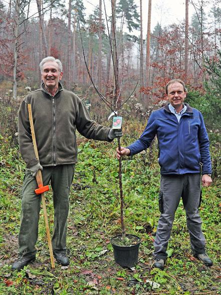 Jagdleiter Wolfgang Leithner (li.) und GR Robert Lochner mit einem Apfelbaumsetzling
