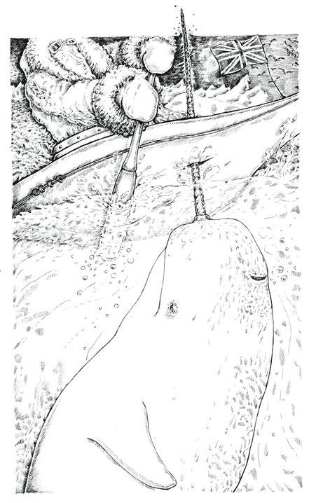 Wal rammt Boot feine Federzeichnung © Caroline Ronnefeldt