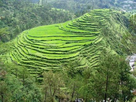 A Darjeeling et au Skkim, il faut voir les immenses plantations de thé et les temples bouddhistes. Il faut aussi visiter une fabrique de thé et goûter le délicieux chai indien.