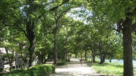 (広島の河川敷はとっても美しく整備されています。サイクリングにお勧めです)