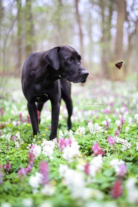 Fotoshooting_Hund_draußen_outdoor_Fotografin_Recklinghausen