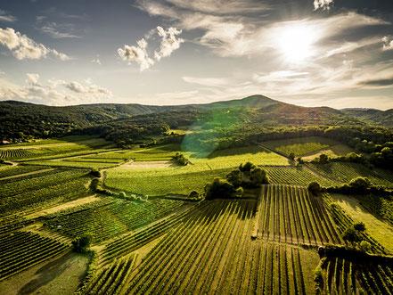 MAG Lifestyle Magazin online Kulinarik Genuss österreichische Weine Weinwelt Weinjahrgang 2019 seltener Eleganz Weißweine Top Rotweine Süssweine  Dessertweine