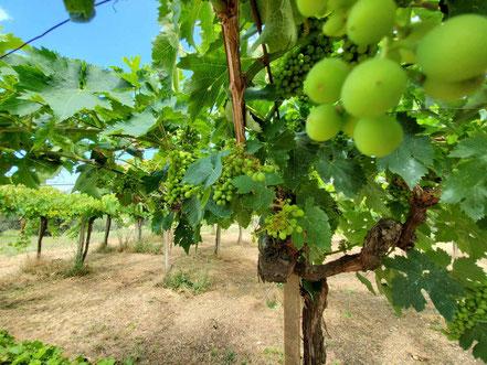 MAG Lifestyle Magazin Reisen Urlaub Italien Wein Abruzzen Weinbau Winzer