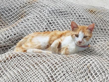 MAG Lifestyle Magazin Dalmatien Urlaub Reisen Adria Haustiere Katzenfoto Katze haustierfreundlicher Strand