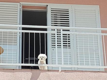 MAG Lifestyle Magazin Hundefoto Hundefotos Bilder Fotos Hunde