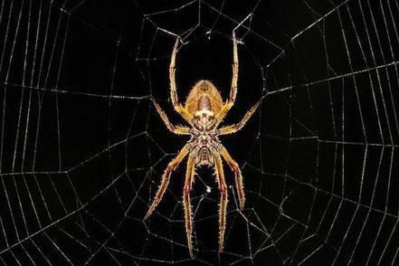Vor dieser Spinne fürchten sich nicht nur Teenager!