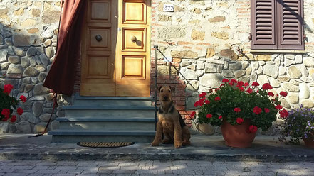 Amoz vom Juratal Toskana-Urlaub