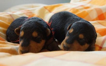 ... zwei der Schwestern unter sich (rot und rosa) ...