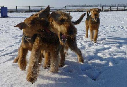 Ausgelassenes Spiel im Schnee